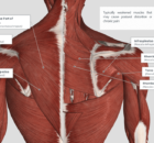 weakened muscles that cause pain