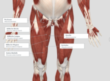 muscles cause back pain