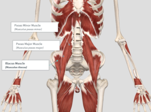exercises to avoid psoas major and minor, iliacus